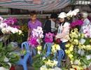 Lan hồ điệp khoe sắc rực rỡ, giá tiền triệu hút khách ở phố biển Nha Trang