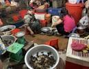 Bất ngờ cơn sốt cua đồng sát Tết:Chị em Hà thành lùng mua khắp chợ