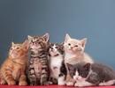 Kí sinh trùng lây từ mèo có thể dẫn tới bệnh tâm thần phân liệt