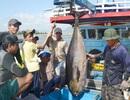 Ngư dân Phú Yên đón lộc biển đầu năm