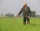 Vui xong 3 ngày Tết, nông dân hăng hái xuống đồng sản xuất
