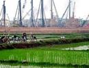 Thái Nguyên được chuyển đổi 15,7 ha trồng lúa làm dự án