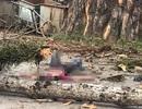 Người đi đường tử vong vì cành cây cổ thụ bất ngờ rơi trúng đầu