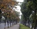 Ngắm Hà Nội đẹp đến nao lòng vào mùa cây thay lá