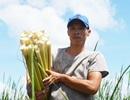 Cà Mau: Người dân kiếm nửa triệu/ngày với đặc sản bồn bồn sau Tết