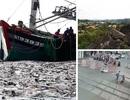 """Mẻ cá 100 tấn của ngư dân và cụ bà thoát bánh tàu hỏa trong """"tích tắc"""""""