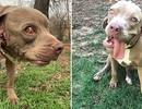 Chú chó kỳ lạ có mồm mọc trong tai