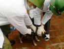 Hơn 600 người bị chó, mèo cắn trong dịp Tết Nguyên đán Kỷ Hợi