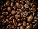 Đưa cà phê vào rang trong không gian