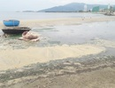 Nước sủi bọt vàng đục lại bủa vây nhiều kilomet bờ biển Đà Nẵng