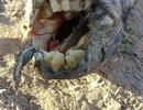"""Phát hiện """"con lươn"""" kì quái có hàm răng giống người"""