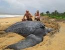 Kích thước thực sự của những loài động vật sẽ khiến bạn phải bất ngờ!