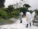 Phát động tuần lễ tiêu độc khử trùng dịch tả lợn châu Phi