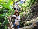 Mở tour du lịch miễn phí đến vùng sâm Ngọc Linh
