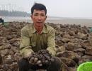 """Nam Định: Săn """"lộc biển"""" bé tin hin, bám ở đá, kiếm nửa triệu đồng/ngày"""