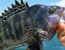 Suy giảm nghiêm trọng số lượng cá trong các đại dương