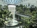 Sân bay Singapore mở cửa khu rừng và thác nước nhân tạo lớn nhất thế giới