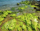 Tháng 3, khám phá mùa rêu Bàn Than