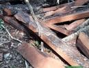 Khởi tố vụ phá rừng gỗ quý tại VQG Phong Nha – Kẻ Bàng