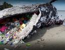 """5 thống kê """"sốc"""" khiến bạn nhận ra mình cần bảo vệ đại dương ngay lập tức!"""