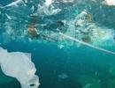 Các mầm bệnh phát tán rộng và nhanh hơn nhờ... rác thải nhựa