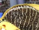 Con ốc lạ nửa triệu đồng/kg vẫn đắt hàng; Trứng gà rẻ như cho, người chăn nuôi phá sản