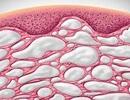 Các nhà khoa học tìm thấy một cơ quan mới trên cơ thể con người
