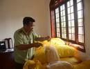 Đắk Nông: Bắt giữ hơn 1 tấn chà bông gà không rõ nguồn gốc đang trên đường đi tiêu thụ