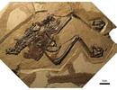 Các nhà khoa học phát hiện ra con chim hóa thạch đầu tiên với quả trứng còn nguyên vẹn