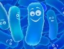 Tại sao lợi khuẩn có thể giúp cho người viêm đại tràng thoát nỗi khổ?