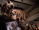 Phát hiện hoá thạch loài khủng long ăn thịt lớn nhất thế giới ở Canada