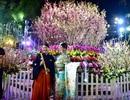 Hàng ngàn cành hoa anh đào khoe sắc bên hồ Hoàn Kiếm
