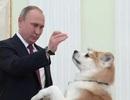 """Những món quà """"bốn chân"""" đặc biệt của Tổng thống Nga Putin"""