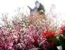 Những điều chưa biết về Lễ hội hoa anh đào 2019