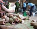 Doanh nghiệp từ chối nhận lô hàng hơn 9 tấn ngà voi giả danh đồ gỗ từ Singapore