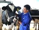 """Hành trình 61 năm của những """"triệu phú"""" trên nông trường Mộc Châu"""