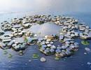 Thành phố nổi: Tương lai của con người khi các bờ biển đã bị nhấn chìm!