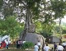 Kỳ lạ những cây cổ thụ được xem như báu vật, trả tiền tỷ cũng không bán