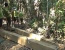 """Truy quét một vụ phá rừng nghiêm trọng, thu 20 m3 gỗ """"vô chủ"""""""
