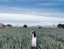 """Check-in cánh đồng dứa đẹp hút mắt, khiến dân phượt phát """"sốt"""" ở Ninh Bình"""