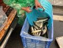 Khu dân cư đại gia: Mấy trăm triệu mua 2 tấn cá phóng sinh xuống hồ