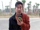 Vì sao Trần Đình Sang bị bắt?