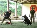 Sau hàng loạt vụ chó tấn công kinh hoàng: Những kinh nghiệm sống còn để thoát hiểm