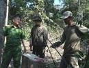 Đắk Lắk: Phát hiện thêm một vụ phá rừng