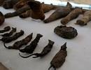 Phát hiện lăng mộ có nhiều xác ướp của… chuột