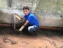 Nuôi lươn đồng không dùng bùn, chàng trai trẻ thu hàng trăm triệu/năm
