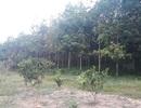 Khẩn trương kiểm tra vụ Giám đốc Công ty lâm nghiệp lấn chiếm đất rừng tại Quảng Trị