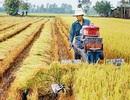 """Tăng trưởng thấp nhất 8 năm, sức ỳ của nông nghiệp vốn vẫn là chuyện """"cơm bữa"""""""