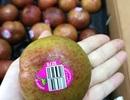 """Mận """"khủng long"""" nhập khẩu Úc to như quả đấm, chị em tranh nhau mua ăn để giảm cân"""