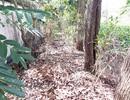 Vụ 300 thai nhi chôn tại bãi rác: Khai quật 2 vị trí để xác định thực tế
